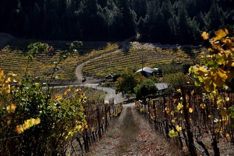 Terroir? It might be a matter of microbes | Vin et agroécologie | Scoop.it