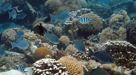 Oxygen Depletion and Acidification Accelerate Coral Death | All Things Geography | Scoop.it