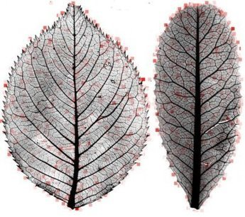 Leaf mysteries revealed through the computer's eye | Tree News | Scoop.it