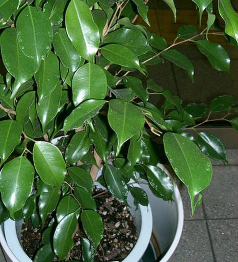 Plantas que funcionam como purificadores de ar | Ambiente | Scoop.it