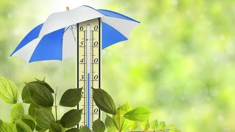 Comment aider vos plantes à affronter la canicule | pour mon jardin | Scoop.it