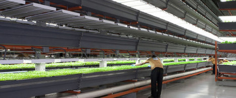 Why Vertical Farming Could Be On The Verge Of A Revolution -- And What's Keeping It Down | Xposed | Scoop.it