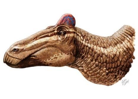 El dinosaurio 'punki'   Blogosaurio   Blogs   elmundo.es   4º de ESO. Bloque 3: La evolución de la vida   Scoop.it