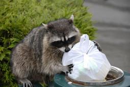 Antech Wildlife Control: animal removal services in Santa Cruz, CA   Antech Wildlife Control   Scoop.it