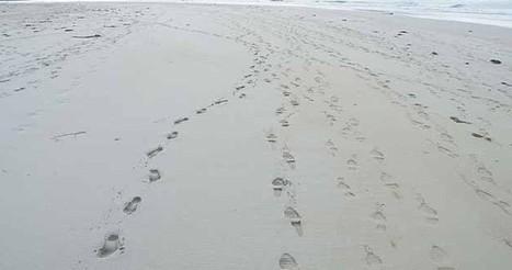List of .ORG And .EDU Backlinks Footprints | WordPress | Scoop.it