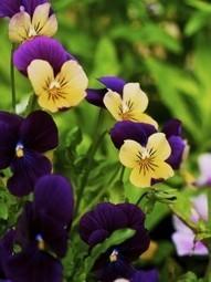 Fall Flowers for an Atlanta Landscape - Bloom'n Gardens | Something Special | Scoop.it