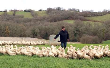 Grippe aviaire : les chèques arrivent dans les 18 départements concernés | Agriculture en Pyrénées-Atlantiques | Scoop.it