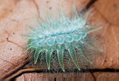 Turn These Caterpillars Into Butterflies With a Simple Click | Worth A Look | Scoop.it