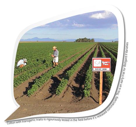 Fact Sheets   Cotton Australia   Year 10 Biology - Genetics   Scoop.it