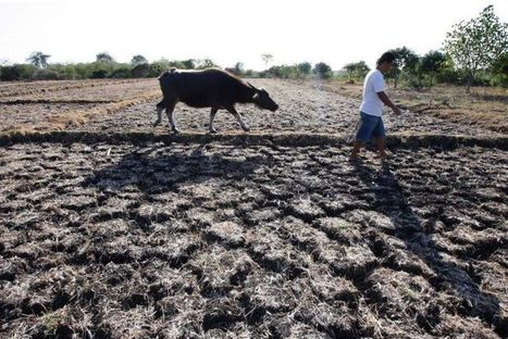 The Philippines places eight provinces under state of calamity due to drought | GarryRogers NatCon News | Scoop.it