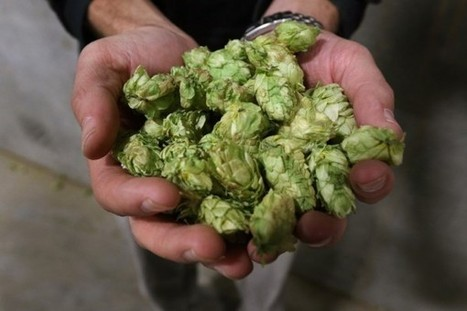 What the heck's a firkin? Your glossary to decoding craft beer jargon | Liquor | Scoop.it
