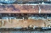 die Biene - Bienengesundheit aktuell: Futterversorgung prüfen! | Maiselbiene | Scoop.it