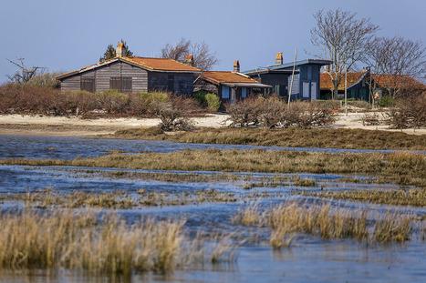 Prenez-vous pour Robinson sur l'île aux Oiseaux | Revue de Web par ClC | Scoop.it