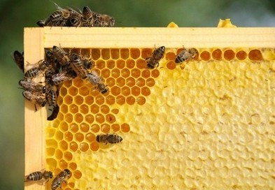 Honey may stop bacterial resistance to antibiotics | Attitude Makes The Difference | Scoop.it