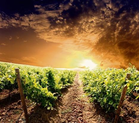 Changement climatique: L'Inra prévoit ce qu'il faudra planter danstrenteans | AgroSup Dijon Veille Scientifique AgroAlimentaire - Agronomie | Scoop.it
