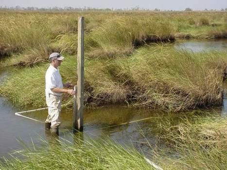 Coastal Wetland Act still vital for combating erosion - The Advocate | Coast | Scoop.it