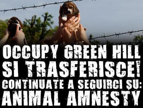 Chi c'è dietro Animal Amnesty | The Matteo Rossini Post | Scoop.it