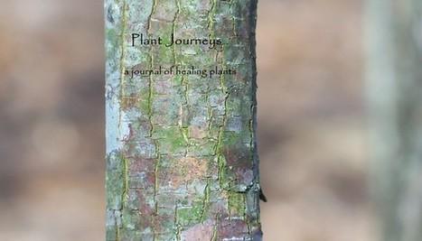 Pleasure Medicine: Your Pipeline to Source | Plantsheal | Scoop.it