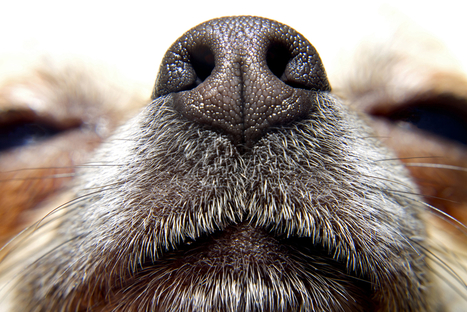 Doctor Disruption » Making Sense of Smell | Sensory Branding | Scoop.it
