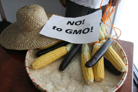 Frankenfood or crops of the future? Gaps in the perception of GM food safety | Modern Agricultural Biotechnology | Scoop.it