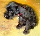 Potty Training Puppies | Indoor Dog Potty Training | Scoop.it