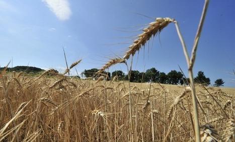« Faire du bio est une démarche économique non idéologique ! » Michel de Lapeyrière, président de la Chambre d'agriculture de Lot-et-Garonne - Aqui.fr | BIENVENUE EN AQUITAINE | Scoop.it