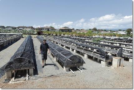 economics of aquaponics   Aquaponics~Aquaculture~Fish~Food   Scoop.it