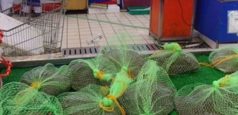 Tesco Stores in China accused of butchering and suffocating Turtles ... | Tesco | Scoop.it