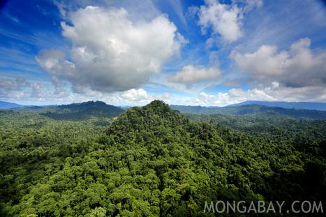 Rainforests | Orangutans | Scoop.it