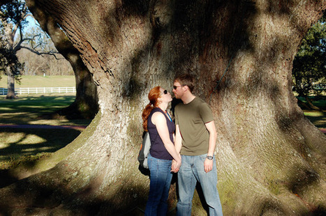 Romance is in the Air! | Oak Alley Plantation: Things to see! | Scoop.it