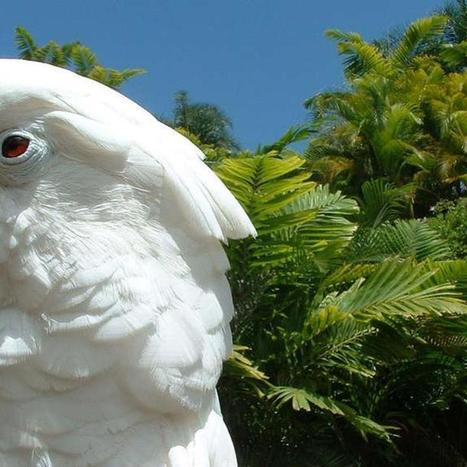 Watch This Funky Cockatoo Groove to Daft Punk [VIDEO] | animals and prosocial capacities | Scoop.it