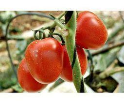 La Asamblea de FEPEX analiza la evolución de los sectores de frutas y hortalizas y aprueba el Plan de Acción para 2014 | Sector hortofrutícola | Scoop.it