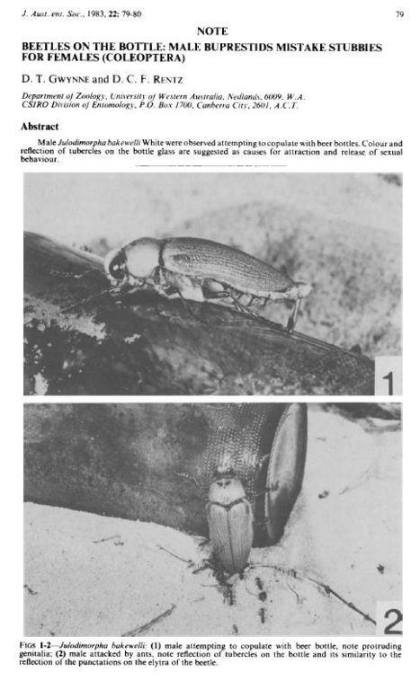 Austral Entomology : Archive 1983 (Copulation sur bouteille de bière) | Insect Archive | Scoop.it