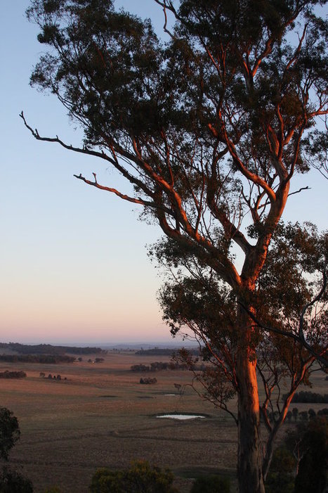 Pasture Cropping: A Regenerative Solution from Down Under | Solutions | my universe | Scoop.it