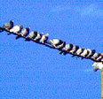 ¿Por qué los pájaros no se electrocutan al posarse en los cables eléctricos? | EUDOG | Scoop.it