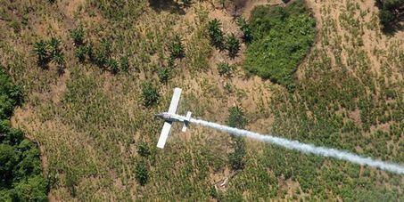 La Colombie suspend la fumigation des champs de drogue | Permaculture, Homesteading & Green Technology | Scoop.it