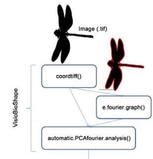 Cómo identificar imágenes biológicas con la física del sonido | ECO-DIARIO-ALTERNATIVO | Scoop.it