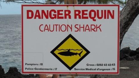 La Réunion : ça craint pour les requins - Néoplanète   Actualités écologie   Scoop.it