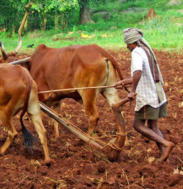 Agricultural investment needed to ensure food security | Food Security and Nutrition | Scoop.it