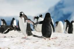 ¡Atención! Viene Penguin 3.0 | Bloguismo | Links sobre Marketing, SEO y Social Media | Scoop.it