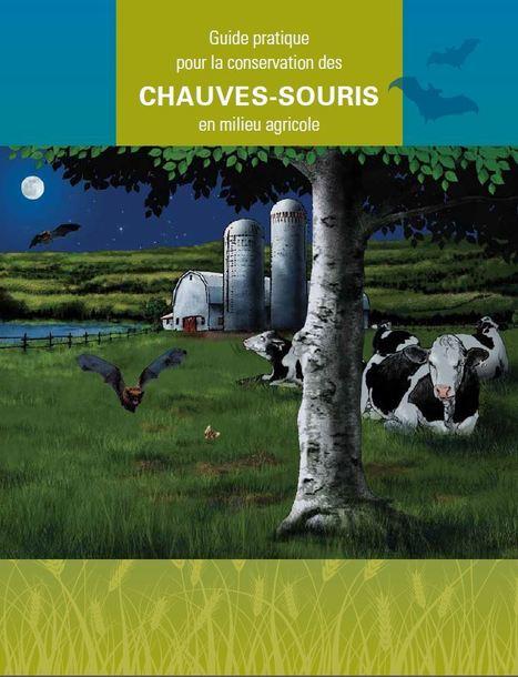 Guide pratique pour la conservation des chauves-souris en milieu agricole | Insect Archive | Scoop.it