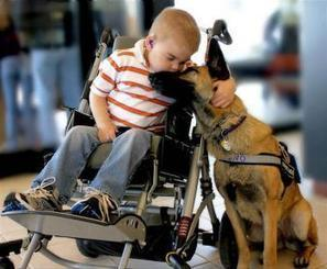 A dying boy's special bond with a rescue dog, by Michelle Leifer | This Gives Me Hope | Scoop.it