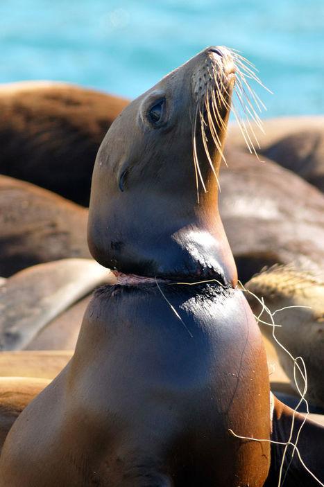 Voici 22 photos qui devraient sensibiliser tout le monde sur l'environnement ! Vraiment choquant... | Ca m'interpelle... | Scoop.it