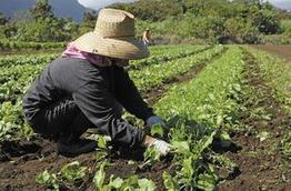 North Carolina, nation's farm profits on the rise | North Carolina Agriculture | Scoop.it