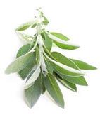 Lokman hekim Sifali bitkiler | Şifalı bitki ilaçları | Download | Scoop.it