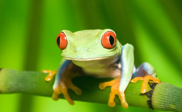 ICYMI: Amphibian Lovers Unite for Save the Frogs Day | fitness, health,news&music | Scoop.it