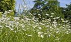 Kew unveils native flower seed bank | Agricultural Biodiversity | Scoop.it