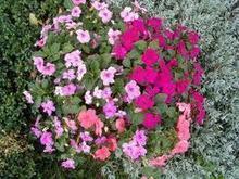 Çà plante dans le quartier de Bitola ! | EpinalInfos | Macédoine | Scoop.it
