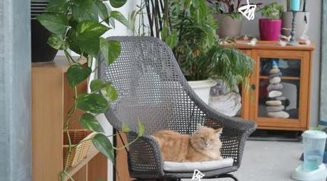 DIY pour nos animaux de compagnie • Hellocoton | CaniCatNews-actualité | Scoop.it