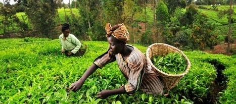 Rwanda's Model Green Village - a Sustainable Development Incarnation - UNEP | African Agriculture Food and Nutrition Security | Scoop.it